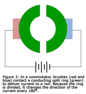 Figure 3: In a commutator, brushes (red and blue) contact a conducting split ring (green) to deliver current to a coil. Because the ring is divided, it changes the direction of the current every 180 degrees.