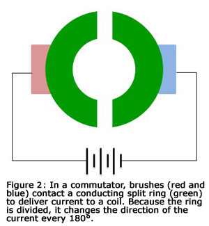 Figure 2: In a commutator, brushes (red and blue) contact a conducting split ring (green) to deliver current to a coil. Because the ring is divided, it changes the direction of the curreent every 180 degrees.